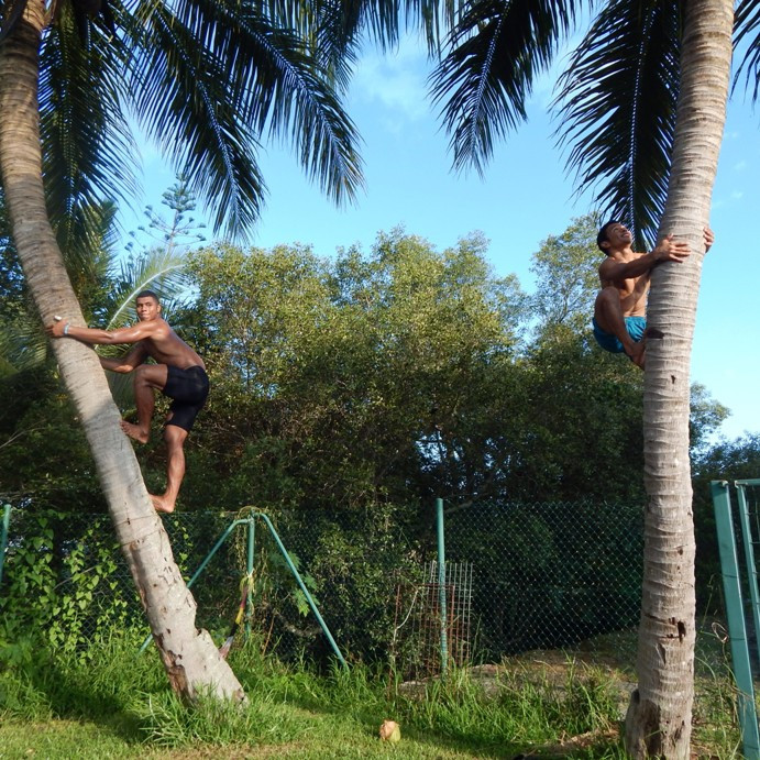 Pacific weightlifters climbing coconut trees as part of their training ©ITG