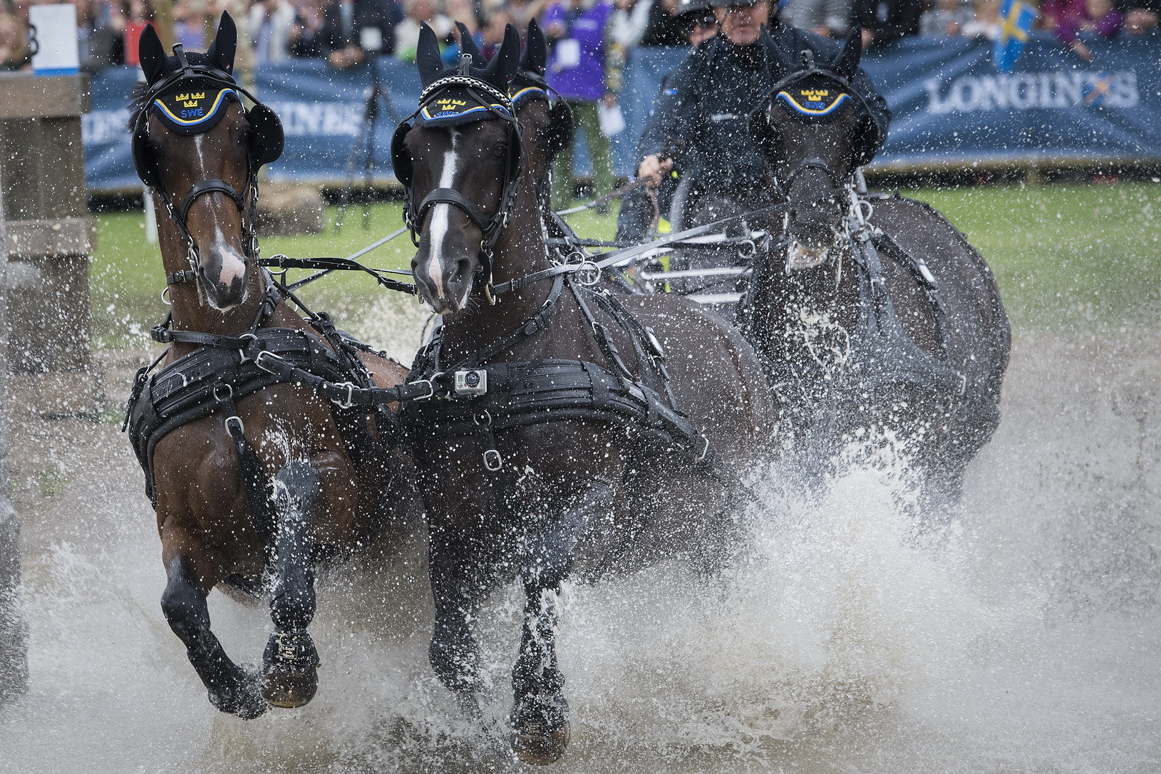 Venues have been announced for 14 events on the equestrian driving calendar up to 2021 ©FEI