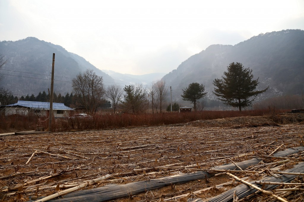 Pyeongchang 2018 have dismissed claims from Green Korea United that Mount Gariwang forest is