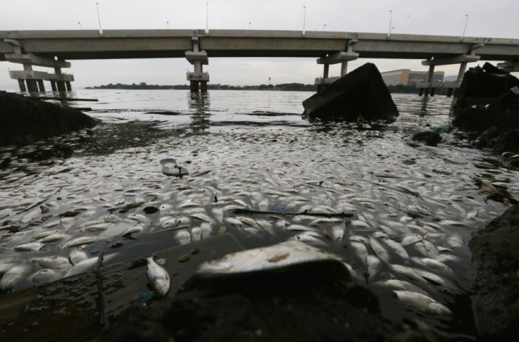 Dead fish float on the edge of Guanabara Bay, part of which is the Rio 2016 sailing venue