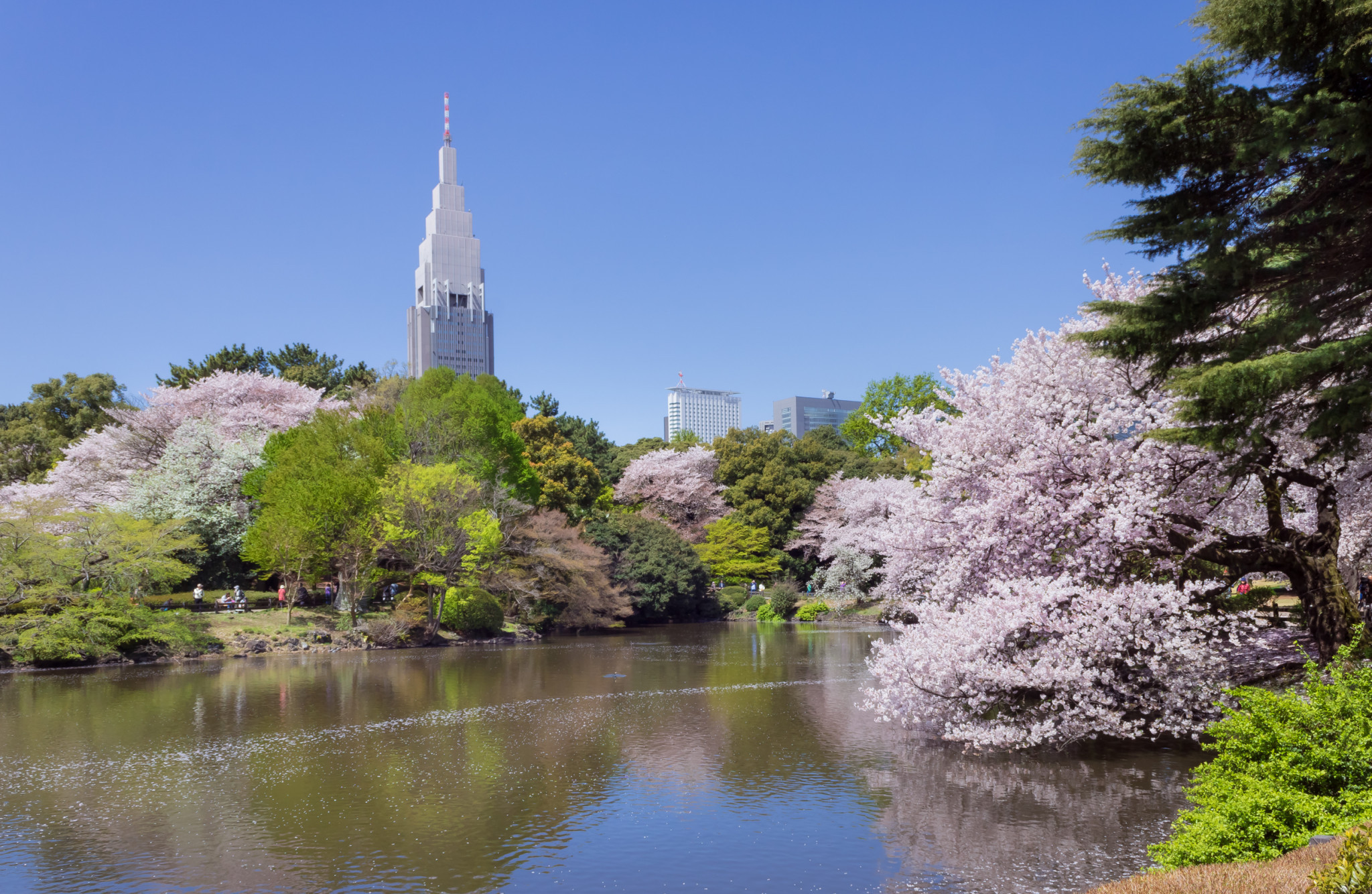 The festival will take place in the Landscape Garden at Shinjuku Gyoen National Garden in Tokyo ©Wikipedia