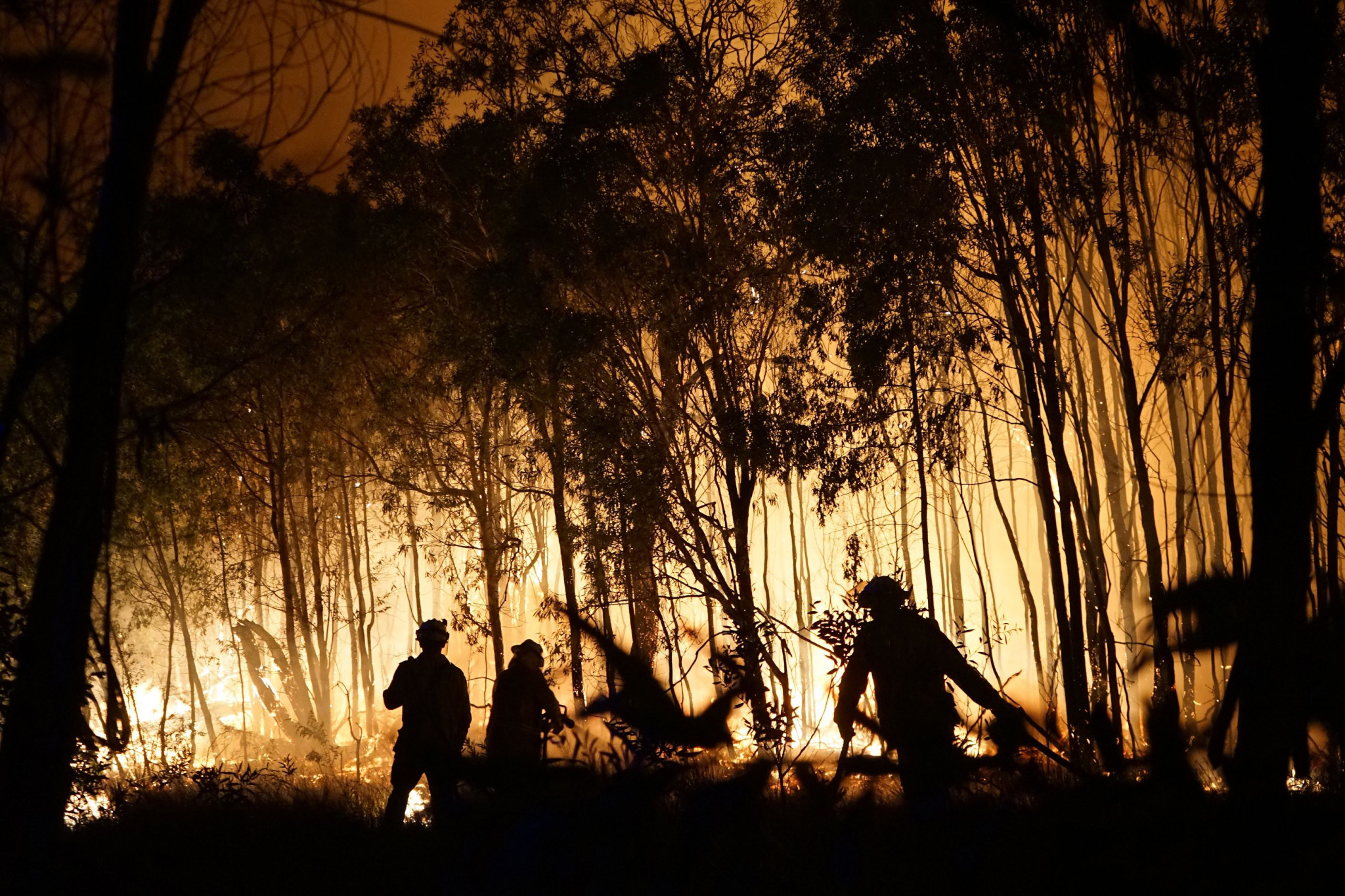 Queensland has been affected by the bushfires engulfing Australia but not as badly as other parts of the country ©Getty Images