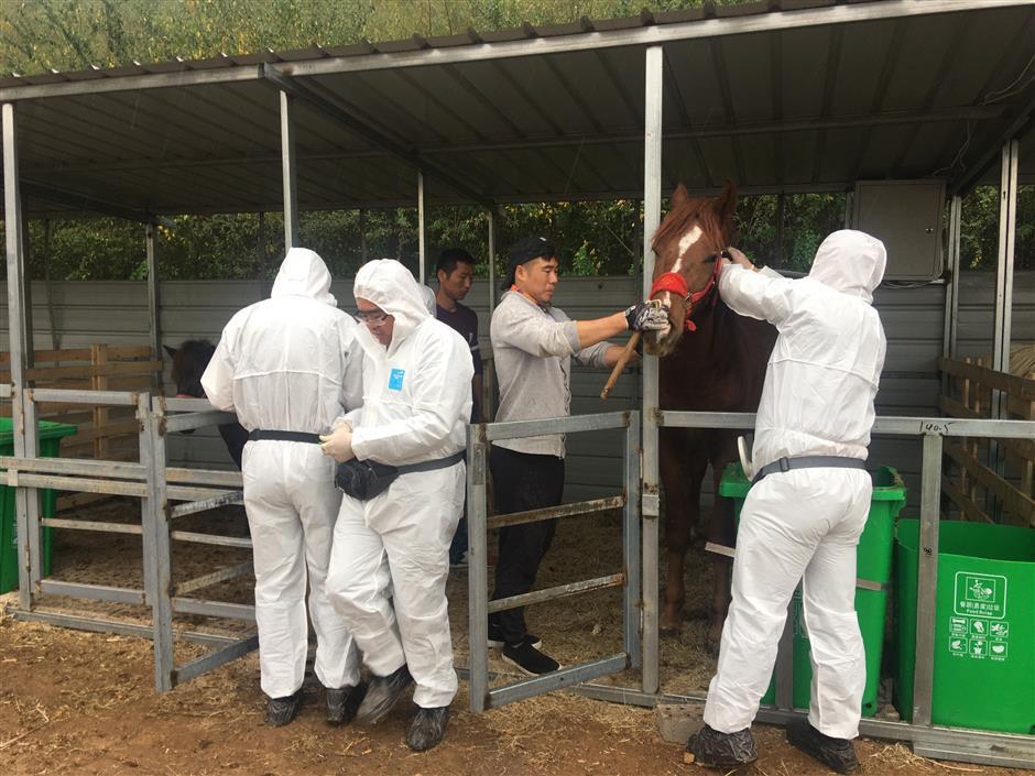 Work begins at Hangzhou 2022 equestrian venue