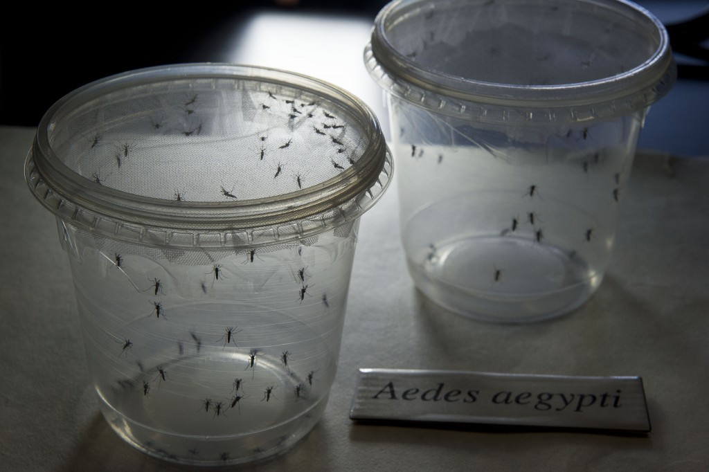 Preganant women have been advised not to travel to countries affected by the Zika outbreak ©Getty Images