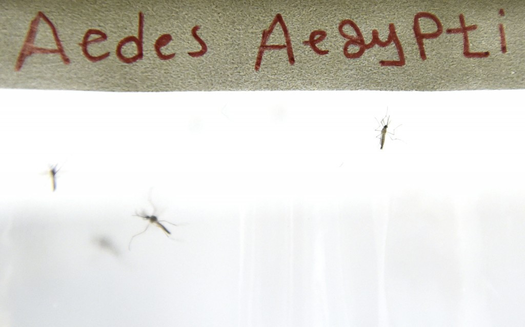 The Aedes mosquito will be blasted by gamma rays in Brazil ©Getty Images