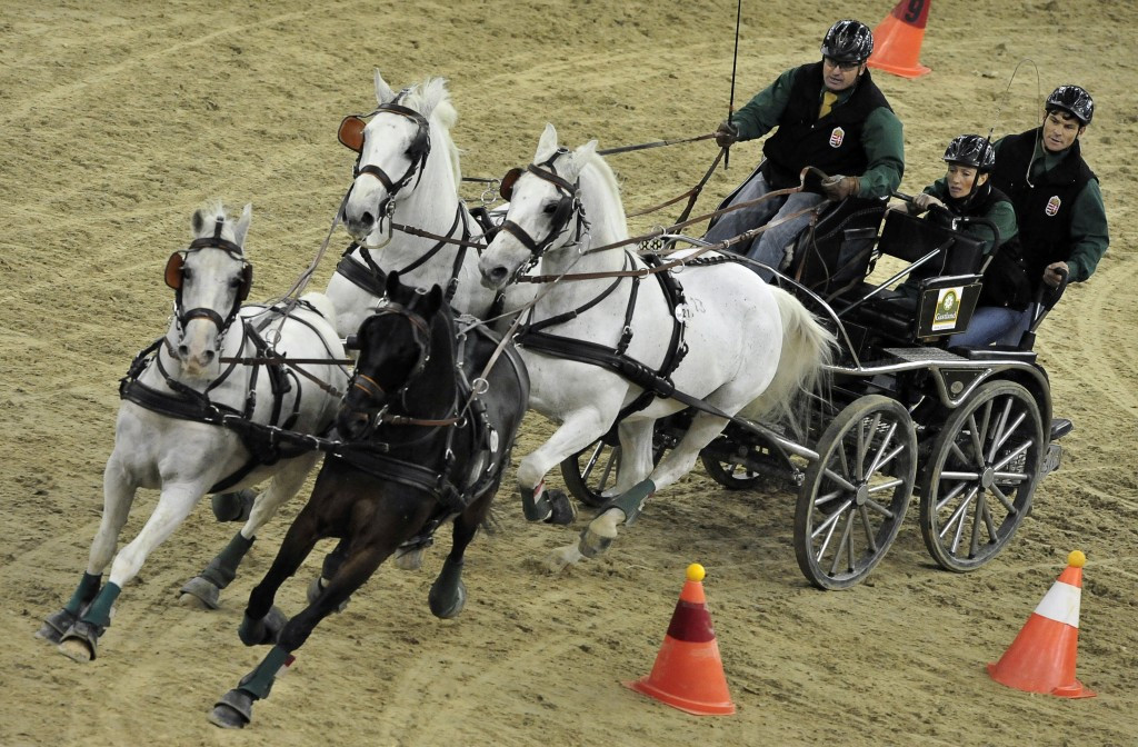 All equestrian events, such as driving, have European Championships
