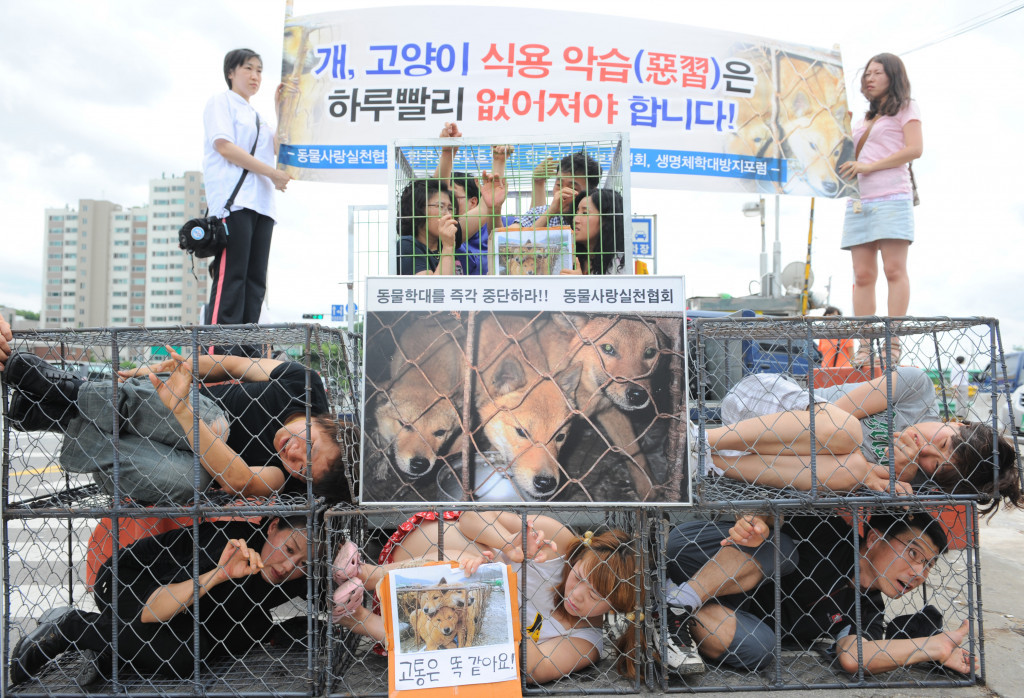 Animal rights activists lie in cages as part of a demonstration against eating dog meat in Seongnam ©Getty Images