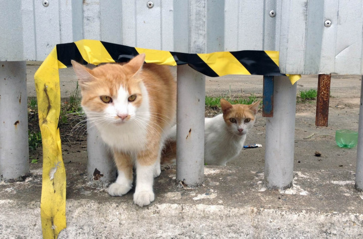 More than 100 feral cats from in and around the Maracana Stadium were vaccinated and treated by the Ro 2016 Animal Management Service ©IOC