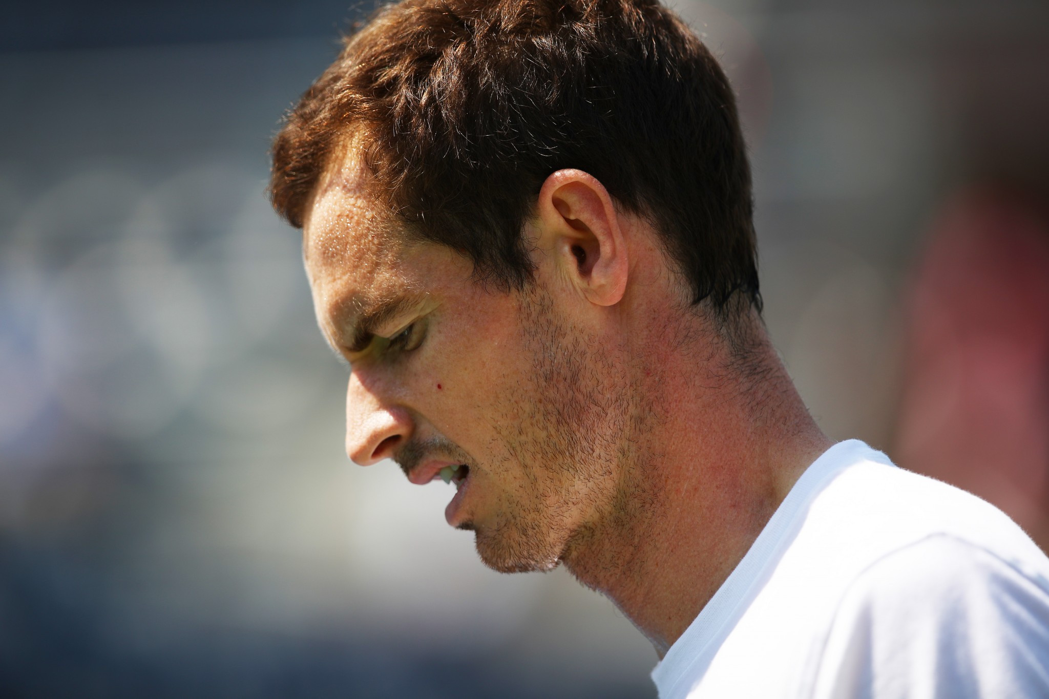 Murray's absence opens US Open up for Federer and Nadal