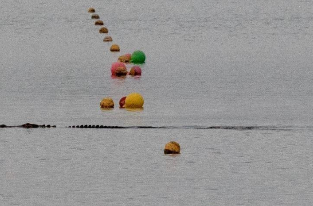 This picture of the IOC at the Nathan Benderson Park course that hosted last week's World Rowing Championships was posted on Instagram by the Danish Association of Rowing Sports. Sorry, not the IOC - an alligator.