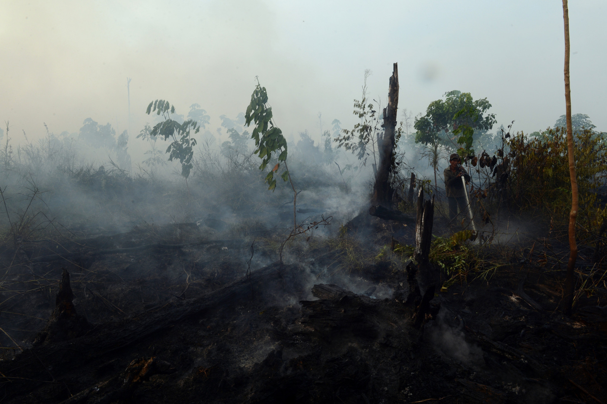 Indonesia has one of the highest deforestation rates in the world ©Getty Images